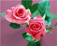 Цветочки-c10